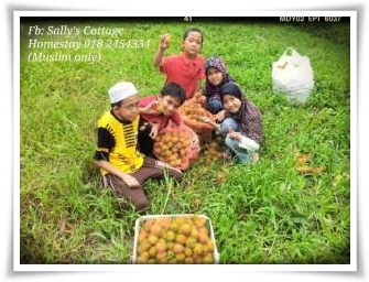 dusun di Sally's Cottage Homestay