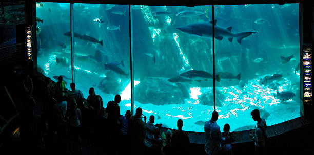 Two Oceans Aquarium, Cape Town, South Africa