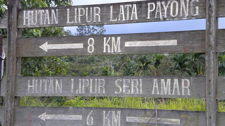 Lata payong best